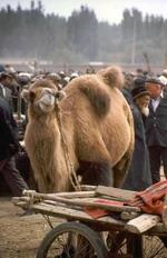 china-kashgar-12