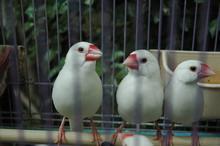 hong-kong-bird-garden