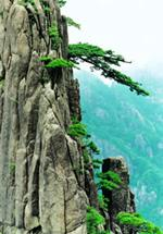 huang shan 2 - Гора Хуаншань