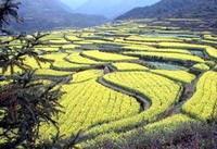 wuyi shan 4 - Гора Уишань