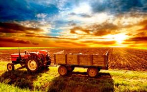 сельское хозяйство (1)