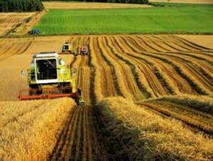 сельское хозяйство (3)