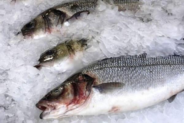 Замороженная рыба из Китая
